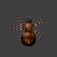 Dungeoneers Academy - Monster Folio: Blood Spider